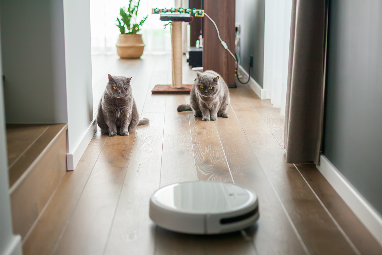Two cats warily observe a smart vacuum