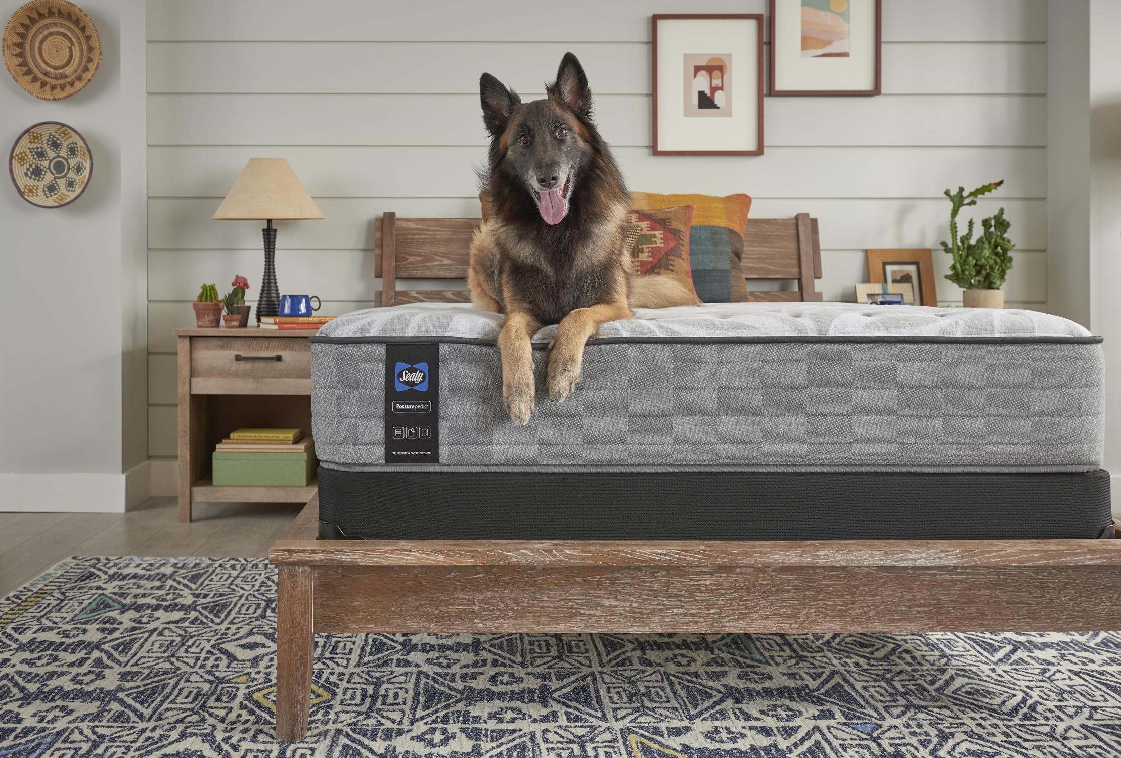 Dog lying on a Sealy mattress