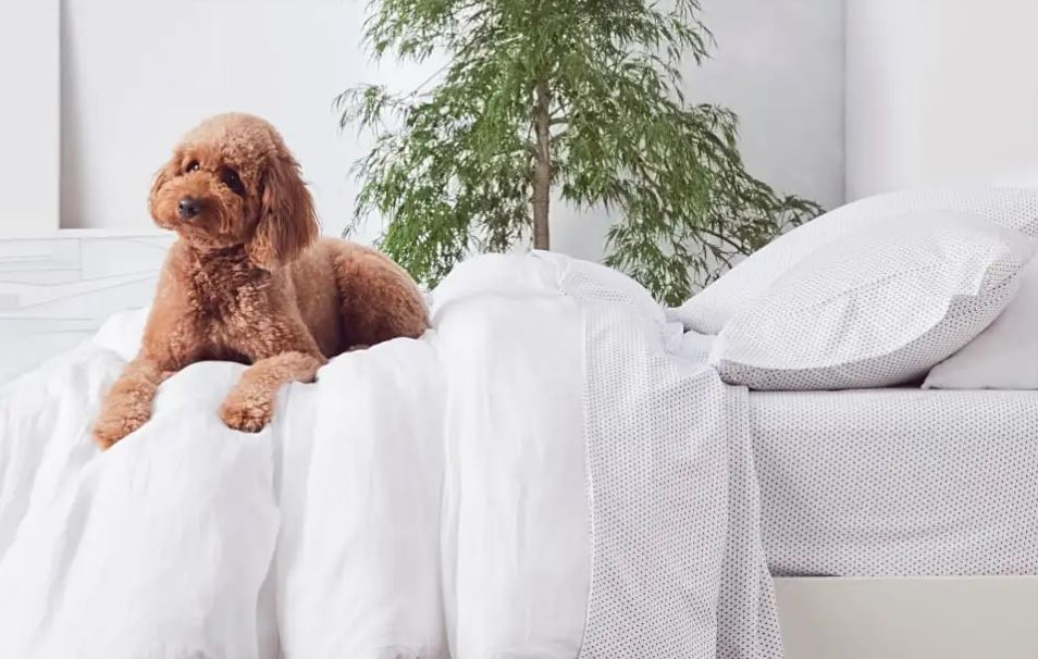 Nectar mattress with a dog on the bed