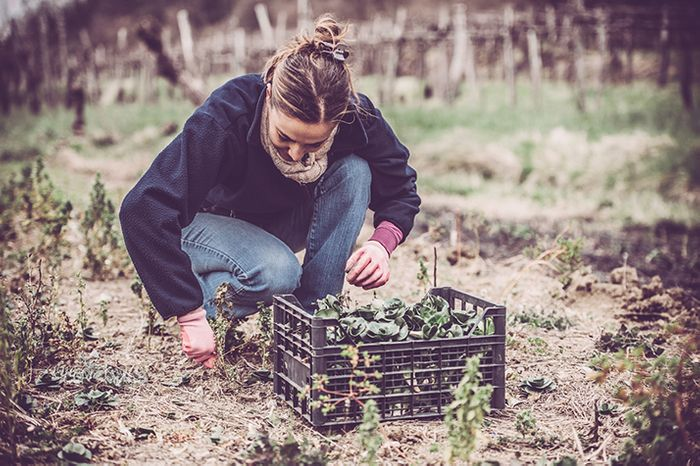 Five Ways to Store Your Winter Produce from Your Garden