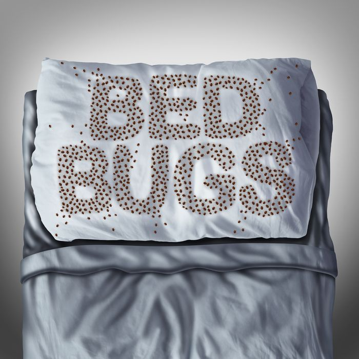 6 Ways to Check Your Mattress for Bed Bugs