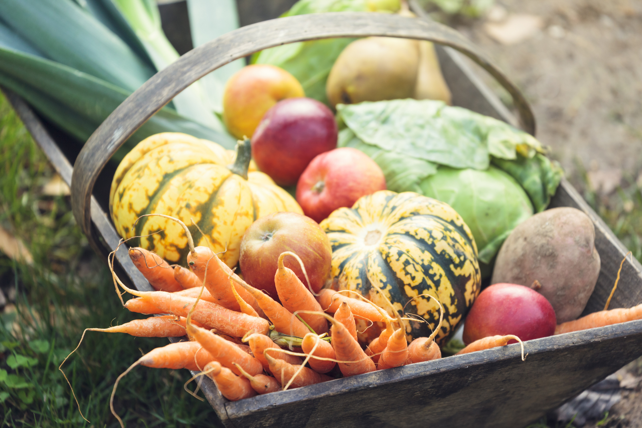 basket full of fresh fall produce