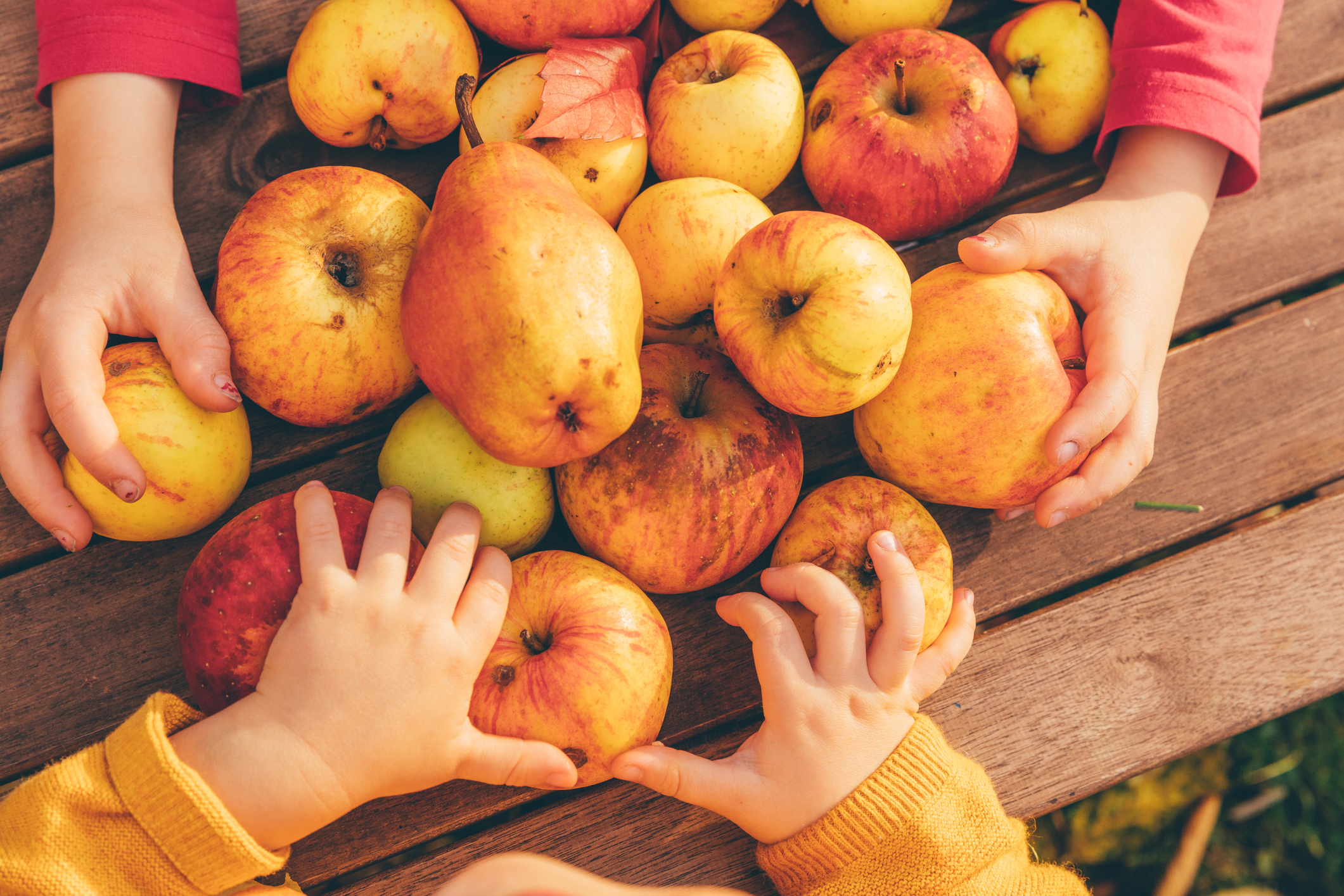 kids reaching for apples and pears