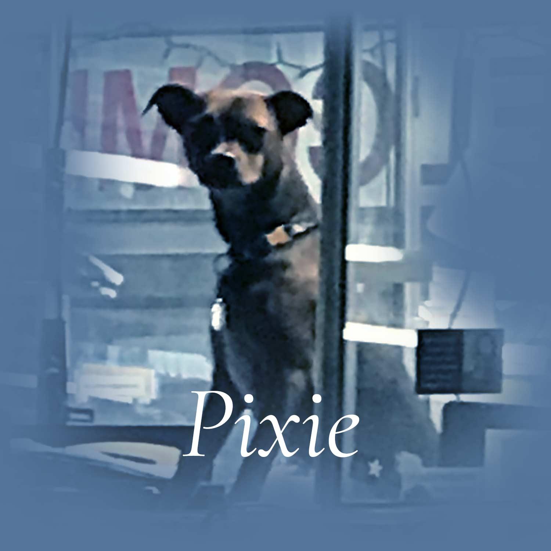 Meet Pixie